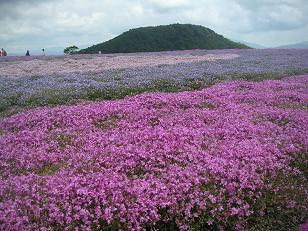 茶臼山と岩古谷山 009
