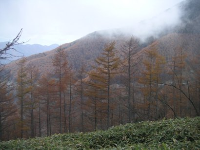 しらびそ高原2011,11 014