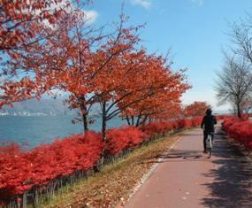 紅葉の中、諏訪湖一周のサイクリング