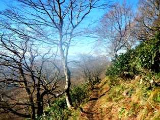 9合目付近のブナ林の道