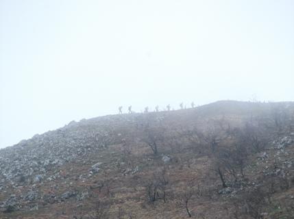霊仙山2013,4,21 008