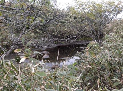 雨乞岳2013、5、26 018