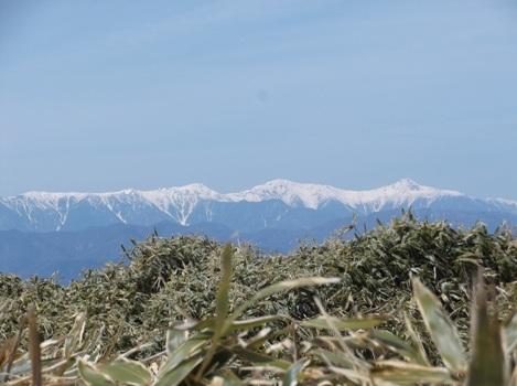 山梨竜ヶ岳2014,4,12 027