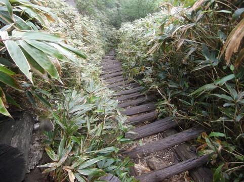 南木曽岳2014、6,22 016