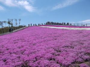 茶臼山~岩古谷山2015、5,24 010