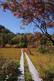⑨葉の燧裏林道 上田代を行く