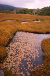 ⑥池に浮かぶ紅葉