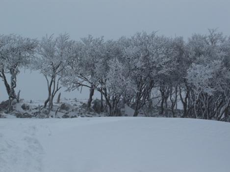 藤原岳2015、2,1 015