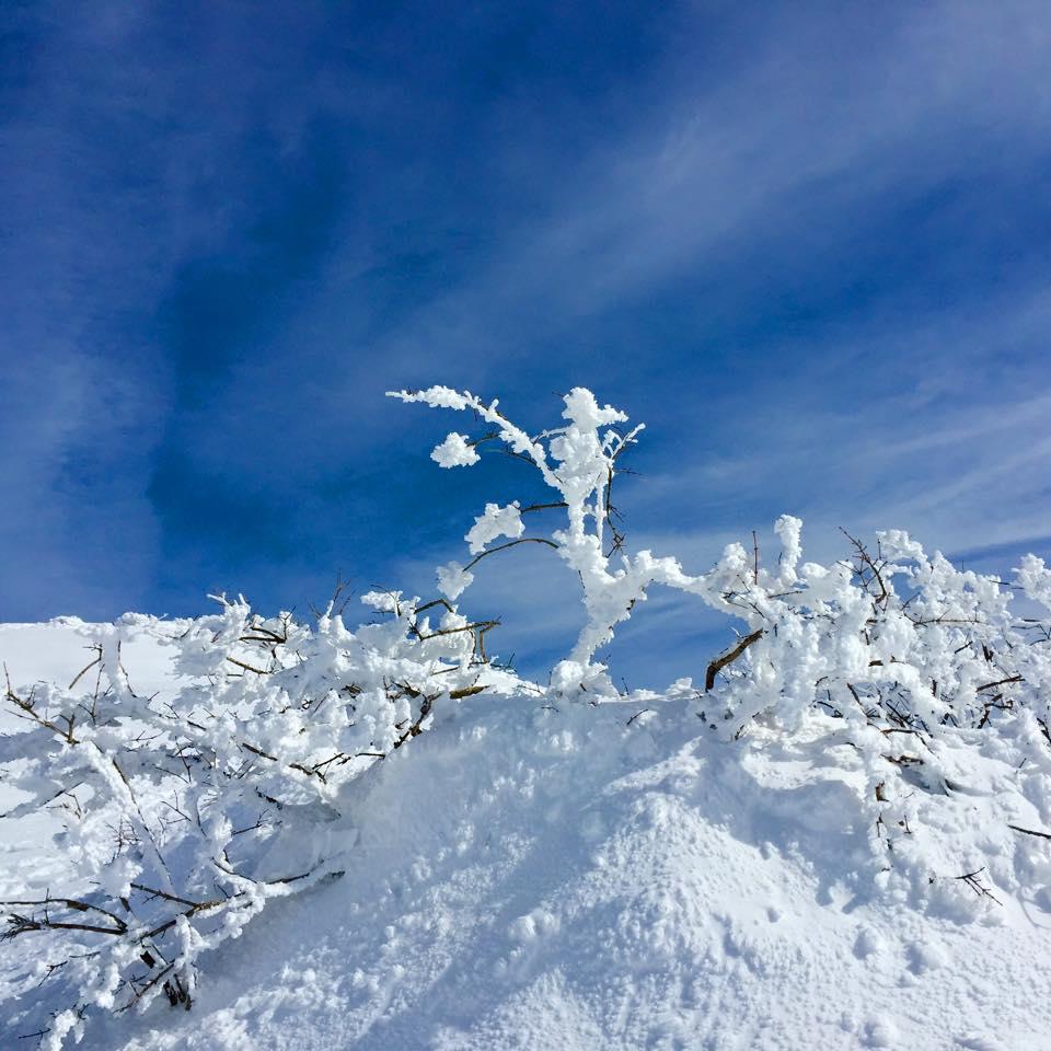 peak 樹氷