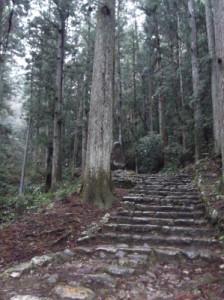 鳳来寺山2015、4、5 011