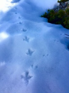 raityou foot prints