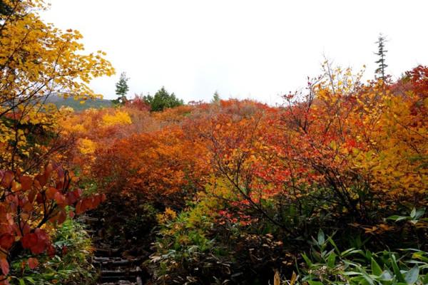 ⑦紅葉の中を至仏山の登り