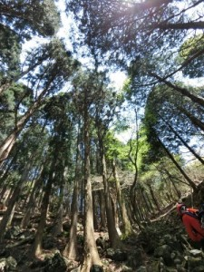 2016.5.1鈴鹿池ノ谷入道ケ岳_5087